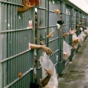 prison calendar vistaprint