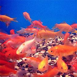 social media fish